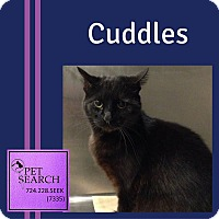 Adopt A Pet :: Cuddles - Washington, PA