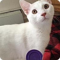 Adopt A Pet :: George - North Brunswick, NJ