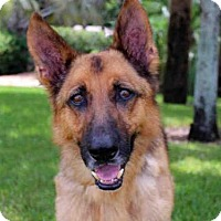 Adopt A Pet :: MAXIMILLIAN - West Palm Beach, FL