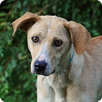 Adopt A Pet :: Sasha - Westport, CT