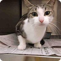 Adopt A Pet :: LAVENDER - Temple, TX
