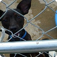 Adopt A Pet :: Happy - Wyanet, IL