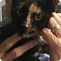 Adopt A Pet :: Nova - Voorhees, NJ
