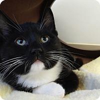 Adopt A Pet :: Rickey - Cloquet, MN