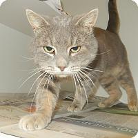 Adopt A Pet :: Axel (Petsmart Morehead) - Newport, NC