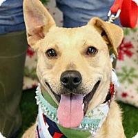 Adopt A Pet :: Daphne - Wenatchee, WA