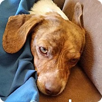 Adopt A Pet :: Leo - Lake Forest, CA