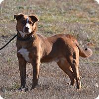 Adopt A Pet :: Rusty - Lebanon, MO