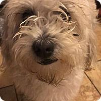 Adopt A Pet :: Marley - Santa Ana, CA