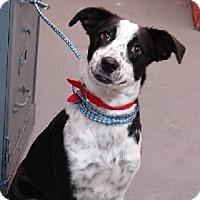 Adopt A Pet :: Freckles - Aurora, IL