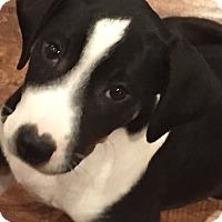 Adopt A Pet :: Sheeba - Mexia, TX