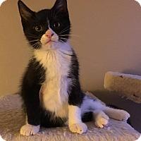 Adopt A Pet :: Salem - Jerseyville, IL