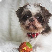 Adopt A Pet :: Banjo - Munster, IN