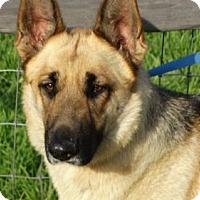 Adopt A Pet :: Buttercup - Vacaville, CA