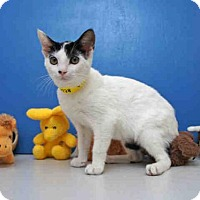 Adopt A Pet :: VENUS - Naples, FL
