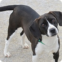 Adopt A Pet :: Bobby - Indianapolis, IN