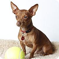 Adopt A Pet :: Diesel - Oakland, CA
