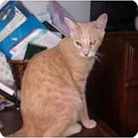 Adopt A Pet :: Tommy (KL) - Little Falls, NJ