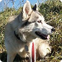 Adopt A Pet :: Ringo - Augusta County, VA