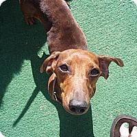 Adopt A Pet :: Browinig - Atascadero, CA