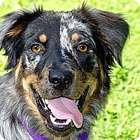Adopt A Pet :: Hudson - PENDING - Savannah, GA