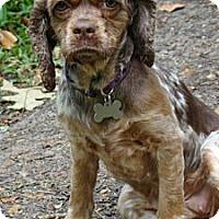Adopt A Pet :: Nina - Sugarland, TX