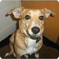 Adopt A Pet :: Tammy - Douglas, MA
