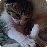 Adopt A Pet :: Tabatha - KANSAS, MO