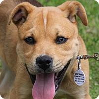 Adopt A Pet :: Versace - Carlisle, TN