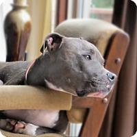 Adopt A Pet :: Thatcher - Chattanooga, TN