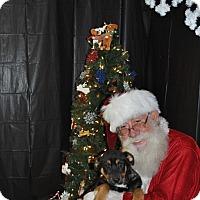 Adopt A Pet :: Ana meet me 12/18 - East Hartford, CT