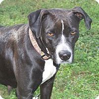 Adopt A Pet :: PEARL - Odessa, FL