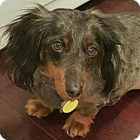 Adopt A Pet :: Kabira - Decatur, GA