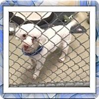 Adopt A Pet :: Colin - IL - Tulsa, OK