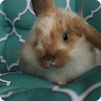 Adopt A Pet :: Butercup - Hillside, NJ
