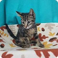 Adopt A Pet :: Sadie - Mt. Vernon, IL