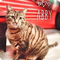 Adopt A Pet :: Abby - Xenia, OH