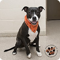 Adopt A Pet :: Champ- URGENT - Troy, OH