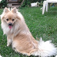 Adopt A Pet :: Brucie - Mississauga, ON
