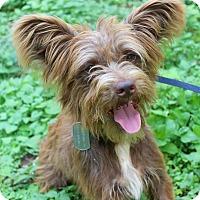 Adopt A Pet :: SMITH - Jacksonville, FL