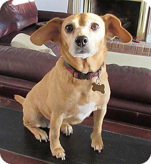 Beagle Mix Dog for adoption in Spartanburg, South Carolina - Gretel