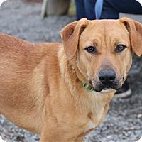 Adopt A Pet :: Goldilocks - Elyria, OH