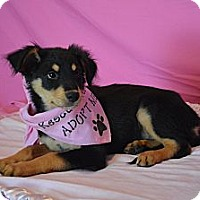 Adopt A Pet :: Ella - Aurora, CO