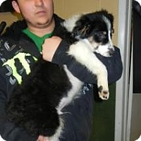 Adopt A Pet :: Barney ADOPTED!! - Antioch, IL