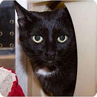 Adopt A Pet :: Nina - Irvine, CA
