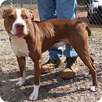 Adopt A Pet :: Prince - Athens, GA