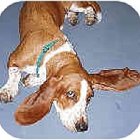 Adopt A Pet :: Daisy - Phoenix, AZ