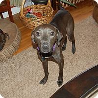 Adopt A Pet :: Jenny - Raritan, NJ