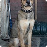 Adopt A Pet :: Roxy - Hamilton, ON