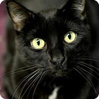 Adopt A Pet :: Samantha - Omaha, NE